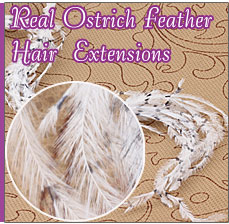 Real Ostrich Feather